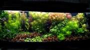 Удобрения(микро,  макро,  калий,  железо) для аквариумных растений.=