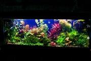 Удобрения(микро,  макро,  калий,  железо) для аквариумных растений.==