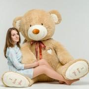 Плюшевые медведи в Минске с доставкой по всей Беларуси