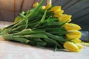 Великолепные Букеты тюльпанов к 8 марта оптом недорого